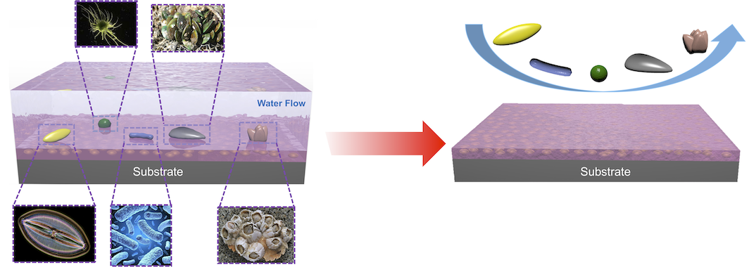Stress-Localized Durable Anti-Biofouling Surfaces